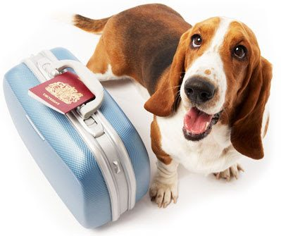 photo_dog_suitcase_1-clipart.jpg